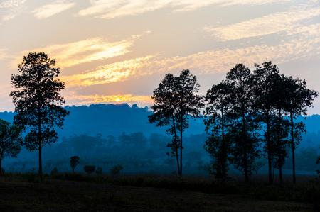 savanna: savanna Field in summer season.