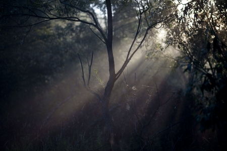 Spider web in forest photo