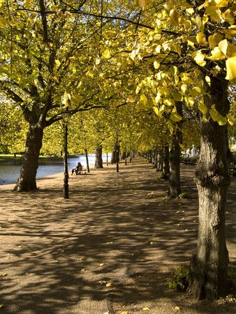 Golden trees in the park near river