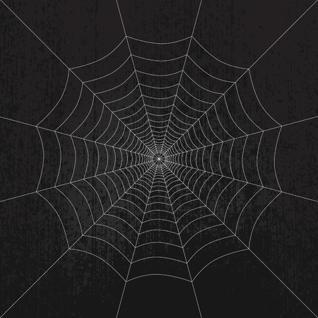 spider web: Spider web on dark grunge background