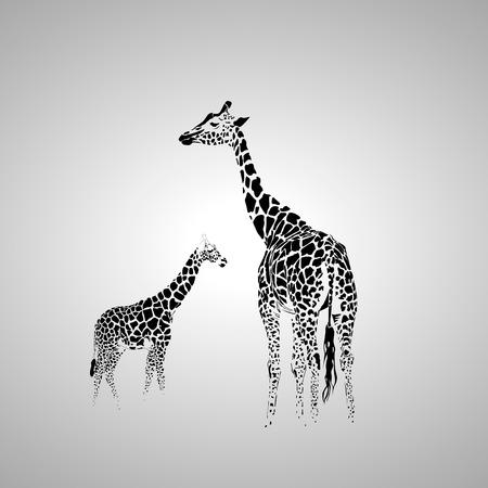Vector silhouette of  giraffe with her baby. Banco de Imagens - 57081659
