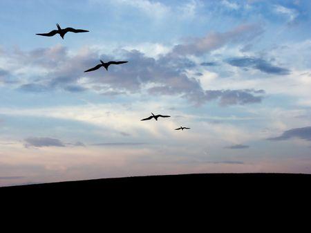 Bird (Blue Sky) photo