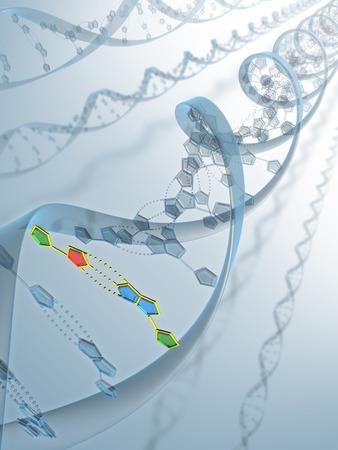 genes: Frame de ADN con su estructura de conexi�n