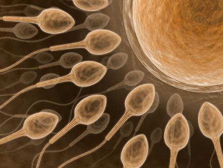 esperma: (ascendente cercano de la esperma) Fecundation del espermatozoide con un ovum Foto de archivo