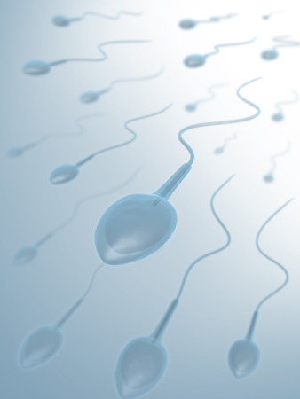 semen: In the clear bottom the origin of the sperms