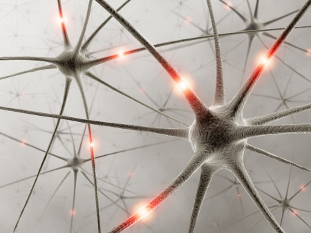 Some hardwired neurons, transferring pulses and generating information Stock Photo - 1858039
