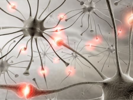 neuron: Some hardwired neurons, transferring pulses and generating information