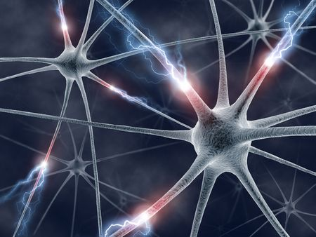 brain cells: Some hardwired neurons, transferring pulses and generating information. Stock Photo