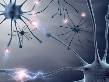 transferring: Some hardwired neurons, transferring pulses and generating information. Stock Photo