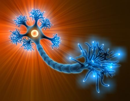 dendrite: Neuron with complete structure for transmission of cellular signals Stock Photo