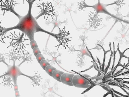 Neuron with complete structure for transmission of cellular signals. Stock Photo - 2047240