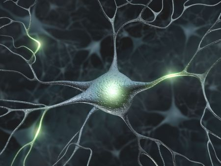 Some hardwired neurons, transferring pulses and generating information. Stock Photo