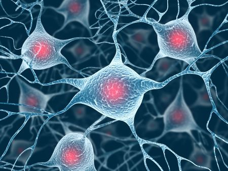 Neurons and Nucleus (Structure of the brain) Stock Photo - 3764359