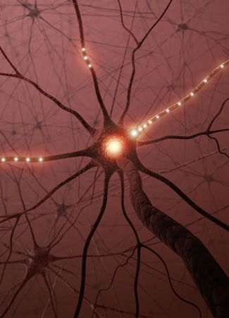 brain cells: Inside the brain. Concept of neurons and nervous system.