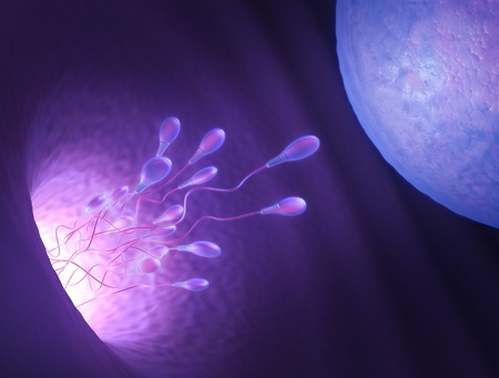 Stylized illustration of various sperm going to meet the egg in the process of human fertilization.
