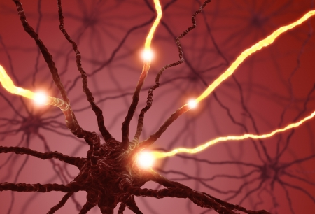 cognicion: Neuronas interconectadas transferir informaci�n con impulsos el�ctricos.