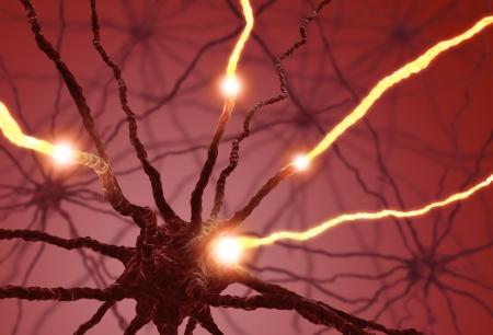 zenuwcel: Onderling verbonden neuronen overdracht van informatie met elektrische pulsen.