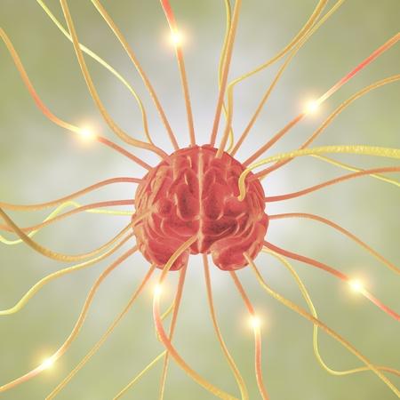 파급 효과 두뇌, 인간 두뇌 시스템의 개념.
