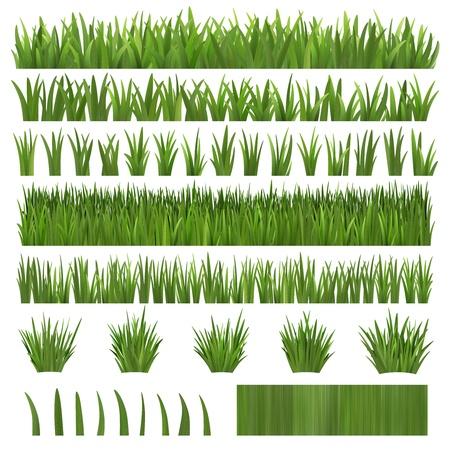 Existen varios tipos de hierbas, formas y texturas. Todas las hojas con textura. Foto de archivo - 12423741