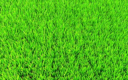Green grass highly detailed. Useful as background and texture photo