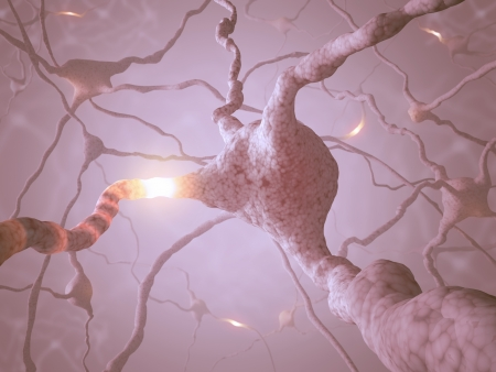 Inside the brain  Concept of neurons and nervous system   Stock Photo - 16380385