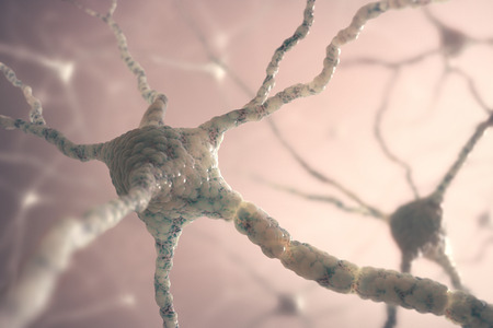 Image concept of neurons from the human brain. photo