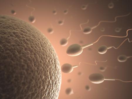 Un grand nombre de spermatozoïdes va l'ovule. Image de la fécondation.
