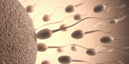 spermatozoon: A lot of sperms going to the ovule. Image concept of fecundation.
