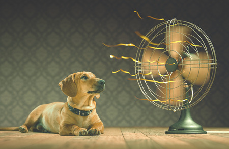 ventilator: The dog is cooling down with the fan while watching the yellow ribbons in motion. Depth of field in eyes line and center of the fan.
