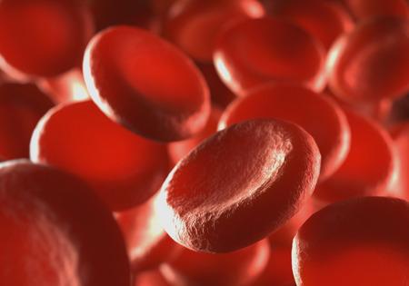 Les globules rouges qui se déplacent dans les vaisseaux sanguins à la profondeur de champ.