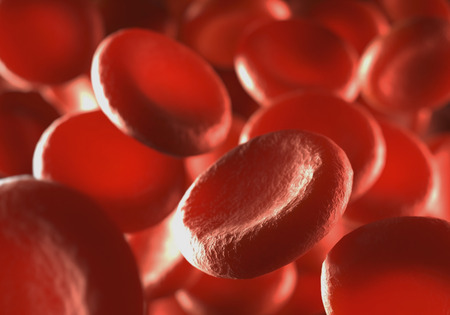 body blood: Red blood cells moving in blood vessels with depth of field. Stock Photo
