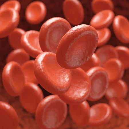 vasos sanguineos: Los gl�bulos rojos que se mueven en los vasos sangu�neos con la profundidad de campo.