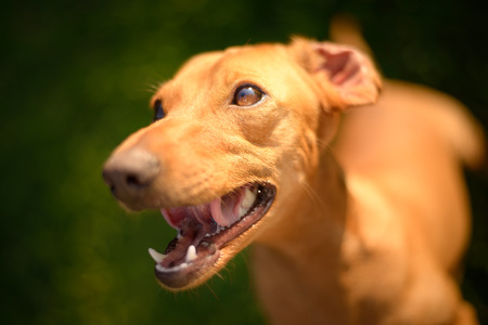 felicity: Happy dog looking up on a sunny day. Stock Photo