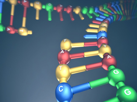 guanine: 3D illustration, concept of DNA replication (Replication Fork). Stock Photo
