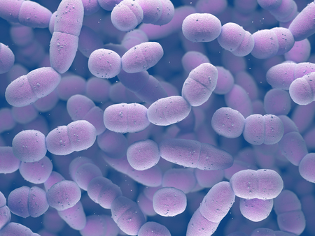 Streptococcus pneumoniae, or pneumococcus, is a gram-positive bacteria responsible for many types of pneumococcal infections. Stockfoto