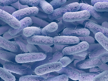 Enterobacteriaceae: large family of Gram-negative bacteria that includes many of the more familiar pathogens, such as Salmonella, Escherichia coli, Yersinia pestis, Klebsiella and Shigella, Proteus, Enterobacter, Serratia, and Citrobacter. Banque d'images