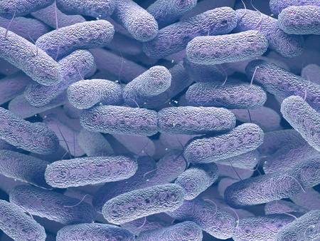Enterobacteriaceae: large family of Gram-negative bacteria that includes many of the more familiar pathogens, such as Salmonella, Escherichia coli, Yersinia pestis, Klebsiella and Shigella, Proteus, Enterobacter, Serratia, and Citrobacter. Standard-Bild
