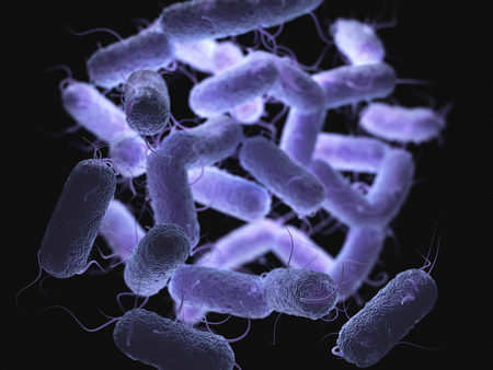 Enterobacteriaceae: large family of Gram-negative bacteria that includes many of the more familiar pathogens, such as Salmonella, Escherichia coli, Yersinia pestis, Klebsiella and Shigella, Proteus, Enterobacter, Serratia, and Citrobacter. Stock Photo