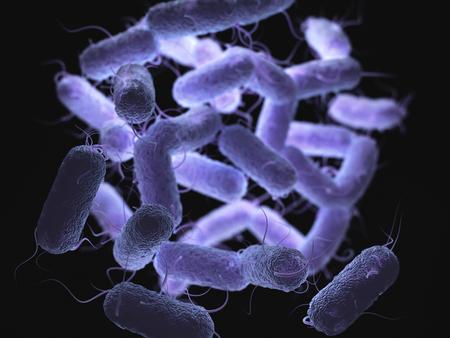 Enterobacteriaceae : Salmonella, Escherichia coli, Yersinia pestis, Klebsiella 및 Shigella, Proteus, Enterobacter, Serratia 및 Citrobacter와 같이 친숙한 병원균을 많이 포함하는 그람 스톡 콘텐츠
