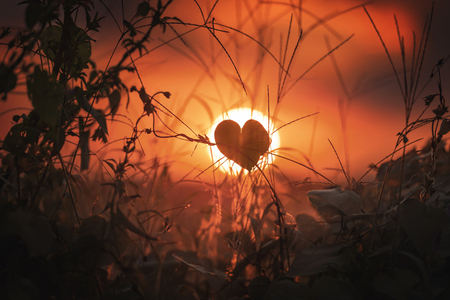 Plant with silhouette of a heart on a sunset in the city of Campo Magro, State of Paraná, Brazil.
