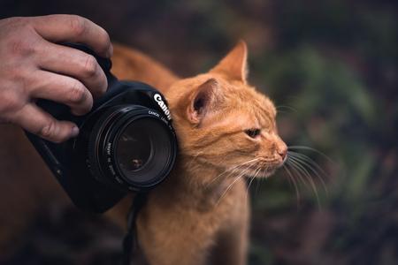 Ilha Do Mel, Paraná, Brazil - June 3, 2017: Docile kitten rubbing herself on the Canon camera. Editorial