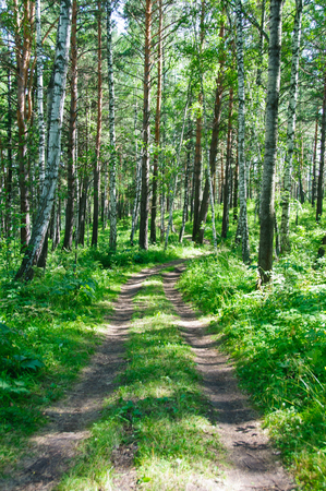 on the lonely road: A lonely road in the summer forest