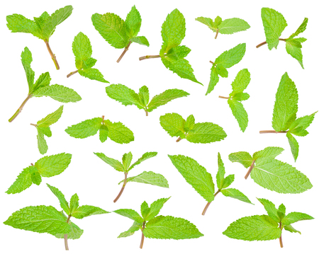 restaraunt: Fresh green leaves of the peppermint isolated on white background
