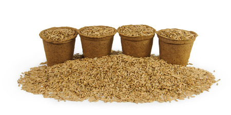 peat pot: Four peat pots filled with oats seeds on white background Stock Photo