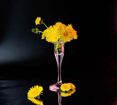 Few opened and half opened dandelion flowers in little glass vase with red backlight located on dark background Stok Fotoğraf