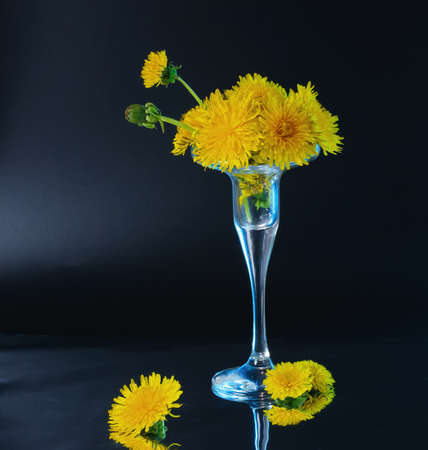 Few opened and half opened dandelion flowers in little glass vase with blue backlight located on dark background Stok Fotoğraf