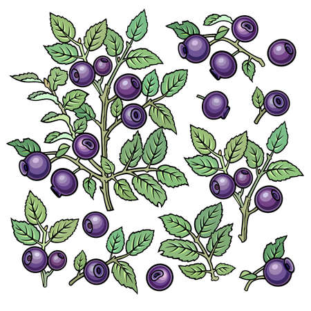 Hand drawn blueberries. Set of objects