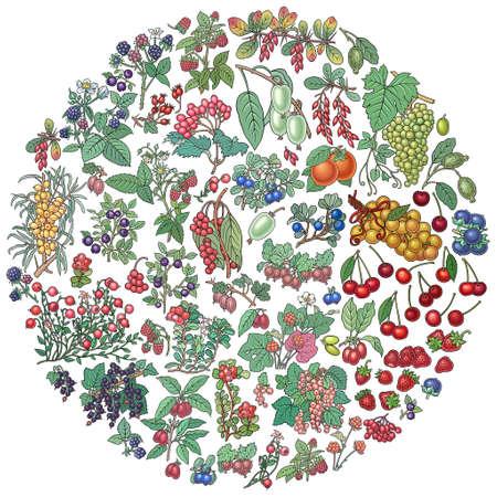 Berries, fruits hand drawn doodles illustration