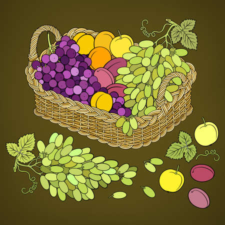 Grapes and peaches in basket. Cartoon illustration