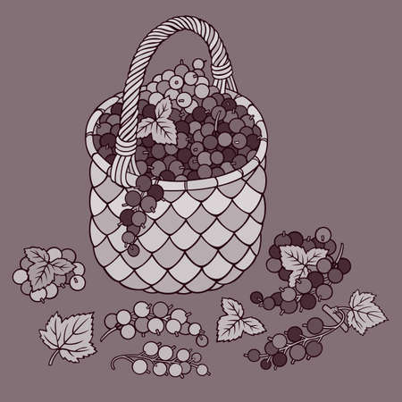 Grapes in basket. Cartoon vector illustration